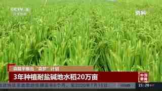 """袁隆平推出""""袁梦""""计划 3年种植耐盐碱地水稻20万亩"""