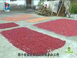 翠花牵线_20200225_探底山茱萸