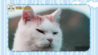 【爱宠资讯】网红宠物鼻祖 头顶万物的猫叔去世