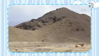 【爱宠-动物来了】动物的行走方式大揭秘:猎豹用脚趾头,骆驼用脚指甲