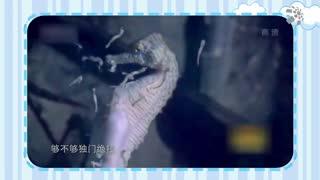 【爱宠-动物来了】海马的独特生活方式:游泳靠漂流?吃饭只靠吸?