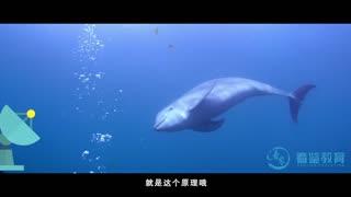 探秘海洋动物家族 第7集