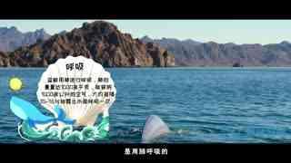 探秘海洋动物家族 第1集