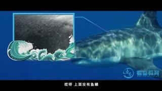 探秘海洋动物家族 第2集