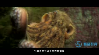 探秘海洋动物家族 第6集