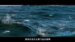 探秘海洋动物家族 第8集