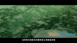 探秘海洋动物家族 第10集