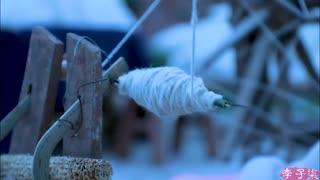 李子柒古香古食_20190115_蓬松柔软的羊羔毛,织一件斗篷便不怕寒冬的风雪
