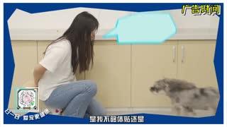 《爱宠说》第12期狗狗的肠胃很重要(下)