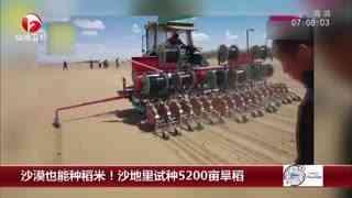沙漠也能种稻米!沙地里试种5200亩旱稻