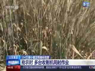 山东曹县:154万亩小麦正机械化收割