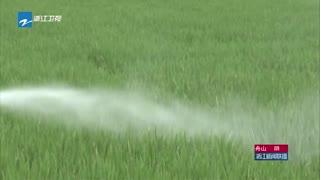 水稻病虫趋重 各地加强田间管理全力保丰收
