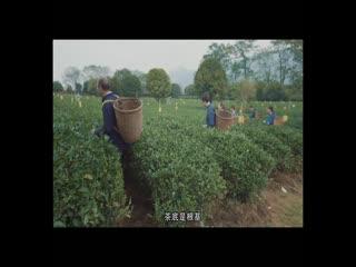 中国品牌档案_20200812_难得!漓江春