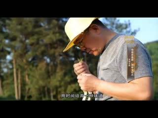 中国品牌档案_20201014_儒蕴茶香居 国味金牡丹