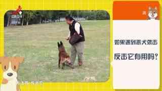 放心吧生活_20200620_生活调查 遇到恶犬袭击如何自救