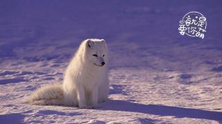 就是要你萌_20210114_你听说过与小动物有关的民间故事吗?