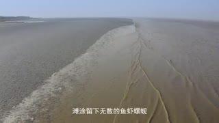 奇妙旅行第二季 第十二集:观临江湿地