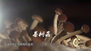 香油秀珍菇:释放食材的原汁原味