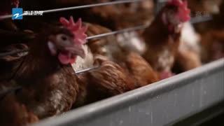 江山:一键启动 数字化精准养殖畜禽