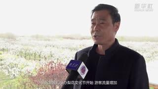 江苏宿豫:梨花扮靓乡村产业增收富民