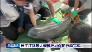 长江江豚最大规模迁地保护行动完成
