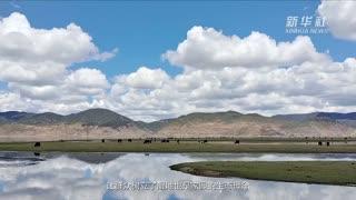 初夏的纳帕海国际重要湿地
