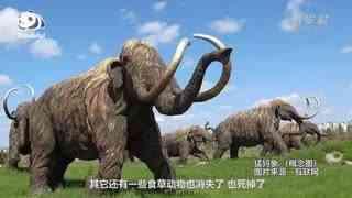 熊猫百问你来问|从吃肉到吃竹,怎么看大熊猫的选择?