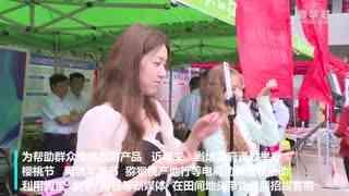 陕西扶风:樱桃映红致富路