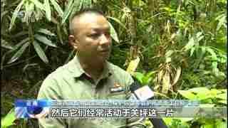云南:野生象群6月5日继续向西南迁移 人象平安