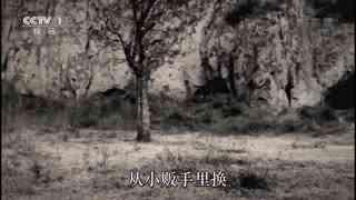 """红色档案:毛泽东牵挂过的那一件件""""小事"""""""