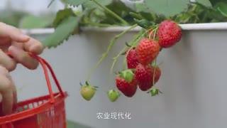 【最江南】05仰山而生 下姜筑梦