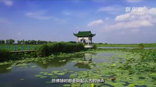 山东章丘:赏荷白云湖