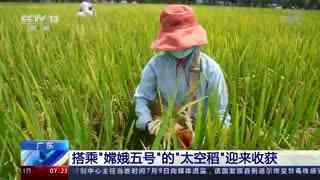 """广东:搭乘""""嫦娥五号""""的""""太空稻""""迎来收获"""
