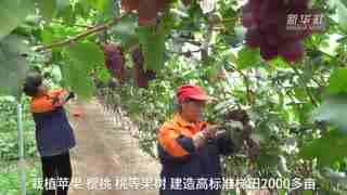 """河北滦州:荒山变成""""花果山"""""""