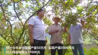 陕西凤县:秦岭山间椒香浓