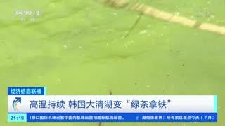 """高温持续 韩国大清湖变""""绿茶拿铁"""""""