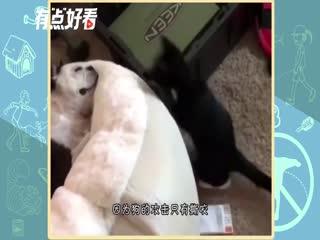 猫狗大战之兵法点津——狗爱咬,猫爱打,看谁厉害!