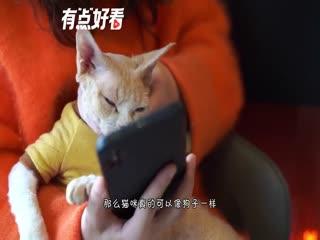 猫咪的智商真的比狗狗低吗?不见得吧!猫咪表示不服气!
