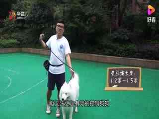 狗狗常见问题:纠正狗狗暴冲,牵引绳是关键 ,牵引绳该如何选择?