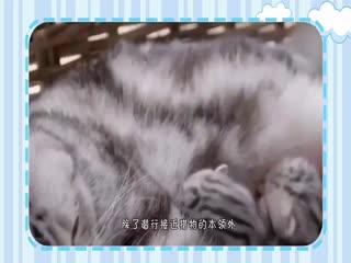 懒猫家中跑步,帅到炸,速度竟比博尔特还快?博尔特跑不过猫?