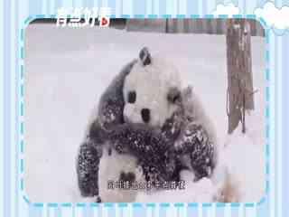 熊猫胃口有多好?一天吞下5个集装箱,边吃边拉!