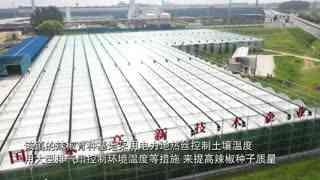 江苏沛县:万亩育种辣椒收获忙