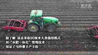 黑龙江克山县:10万亩马铃薯迎丰收