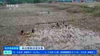 山西临汾:田地大面积被淹 农户抓紧抢收