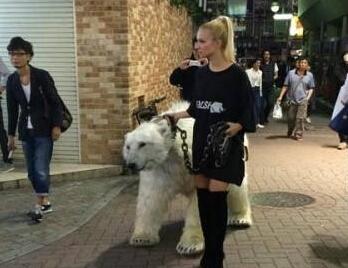 东京美女街头遛熊 遛猫遛神马真是弱爆