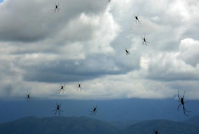 澳大利亚惊现漫天蜘蛛雨百万脑瘫从天而降-视频丁丁蜘蛛图片