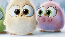 《愤怒的小鸟》大电影愤怒的小小鸟们新春送祝福