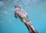 现实版哥斯拉现身长达2米 盘点全球十大怪异动物