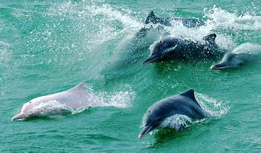 男子发现搁浅海豚送回大海 网友:感人