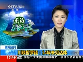 青海班玛 川陕哲罗鲑 14年未见活体图片
